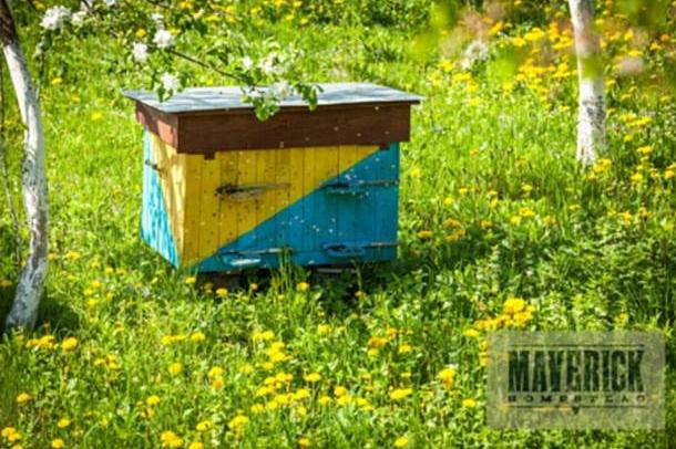 honeybees hive bees